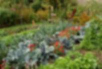 chou-rouge-zinnias.jpg