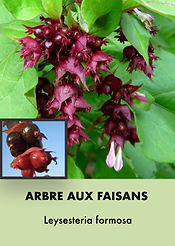 Photos arbustes (Modifiable).003.jpeg