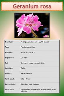 Aromatiques.080.jpeg