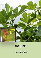 Photos arbustes (Modifiable).015.jpeg
