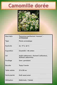 Livret aromatiques.022.jpeg
