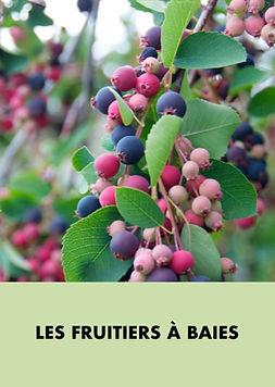 Les_fruitiers_à_baies.001.jpeg