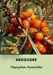 Photos arbustes (Modifiable).004.jpeg