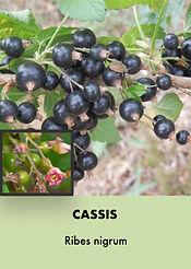 Photos arbustes (Modifiable).010.jpeg