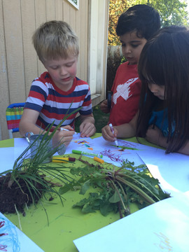 Documenting plant observations