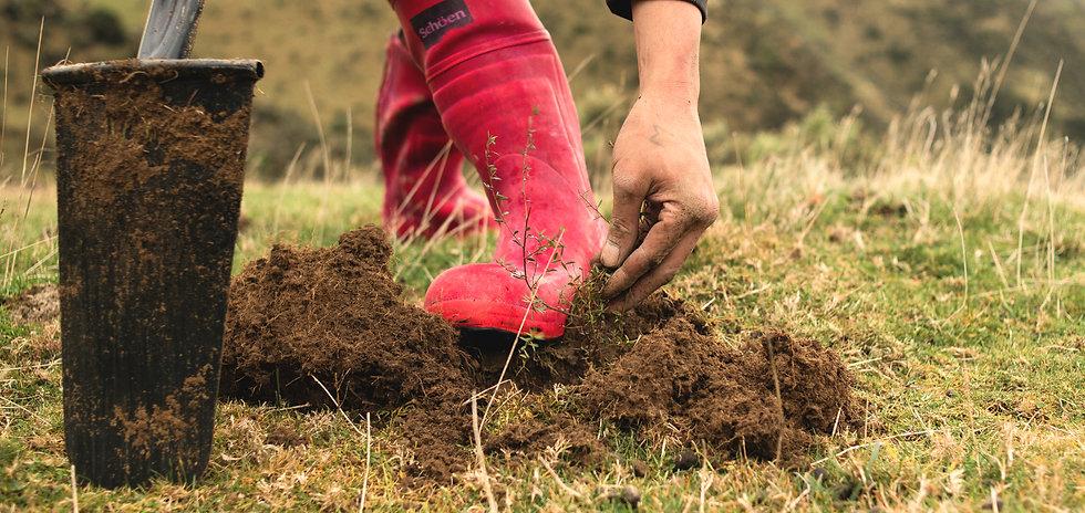 planting-trees_2x.jpg