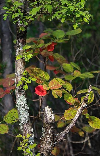 paysage feuilles.jpg
