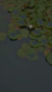 sennennosumika hd.jpg