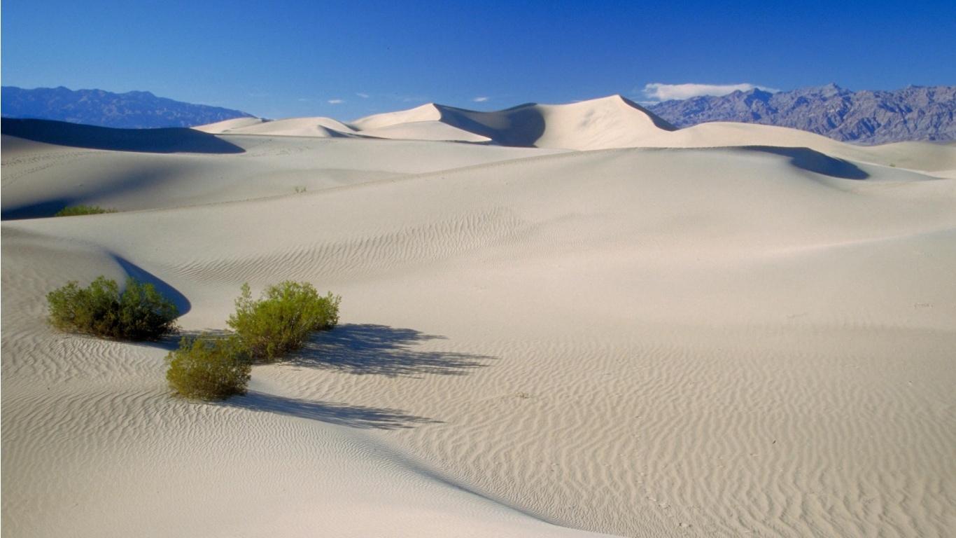 muerte-de-dunas-en-el-valle-la-504010