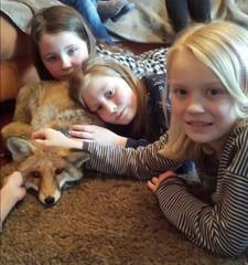 Foxy auf einem Kindergeburtstag