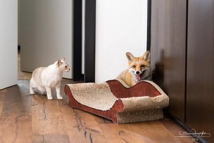 Foxy versteht sich auch mit Katzen