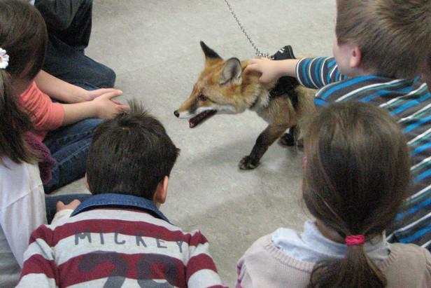 Foxy zu Besuch in einer Schulklasse
