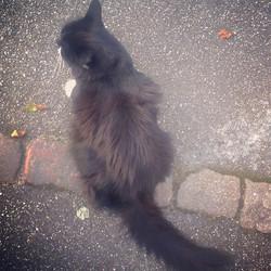 Instagram - kucing