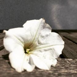 Instagram - city gardening
