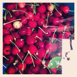 Instagram - Fresh Cherries, harvested from the courtyard...jpg