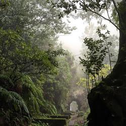 #nature #madaboutmadeira