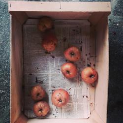Instagram - Äpfel