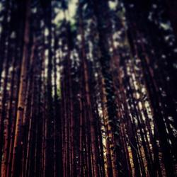 Instagram - wald