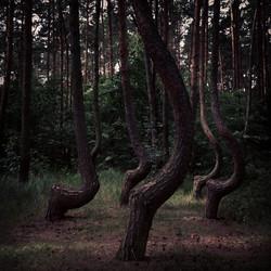 Instagram - krzywy las