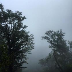#madaboutmadeira #nature #mist