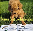Heaven Sent Golden Doodles.JPG
