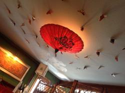 Butterflies at  Tree Top Thai