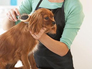 Warning Signs It's Time To Change Dog Groomers