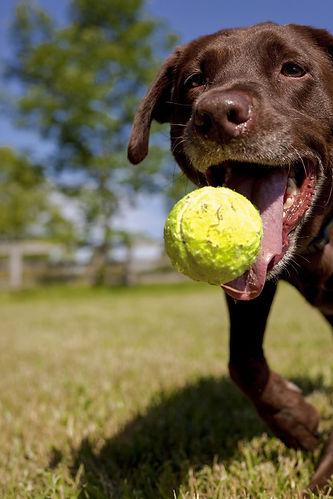 training-dog-play.jpg
