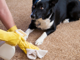 Natural Cleaning Tips For Dog Parents