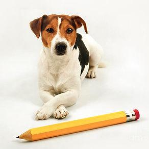 very-smart-dog-with-big-yellow-pencil-ki