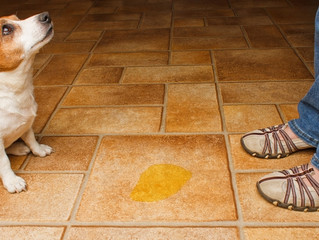 7 Reasons Your Dog Is Peeing In The House