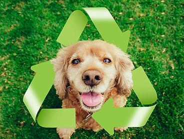 eco-friendly-pets-carbon-pawprint.jpg