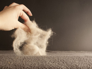 How To Remove Pet Hair From Every Surface