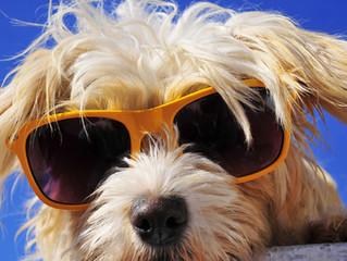Dog Sunburn: 4 Tips To Keep Your Dog Safe In The Harsh Sun