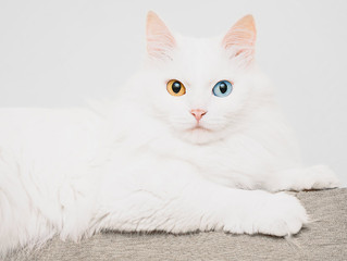 How to Recognize Deafness in Your Cat