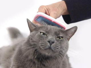 Cat Hair Everywhere: How to Deal with Shedding