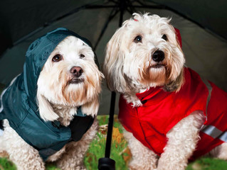 8 Hurricane Safety Tips For Pet Parents