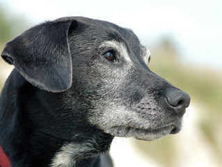 5 Great Reasons To Adopt A Senior Dog!