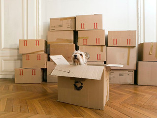 Moving? Tips To Help Your Dog Adjust To A New Home!