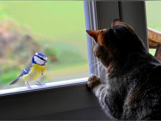 Can Cats and Pet Birds Live Safely Together?
