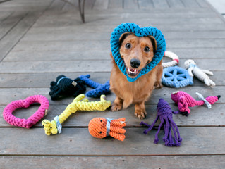 How To Clean Dog Toys (& When To Toss Them)