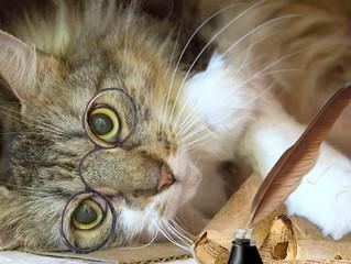 The Five Cs of Senior Cat Care