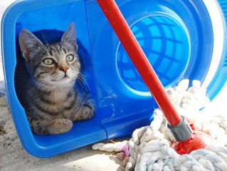 7 Simple House Cleaning Tips for Cat Parents