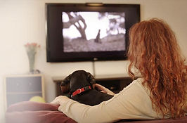 tv-for-dogs.jpg
