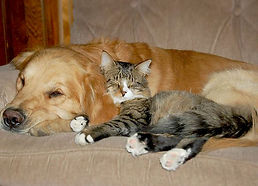 catdogfriends.jpg