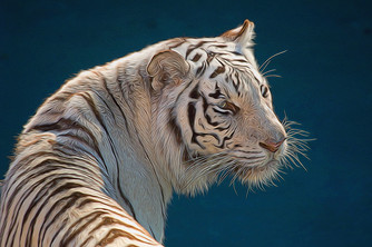 The Tiger, which plays with the feather.Working with polarized energies in your dreams and your life