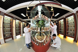 Herbology learn about the traditional chinese medicine