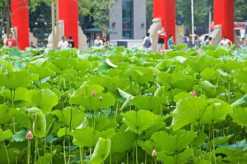 Sichuan-University.jpg