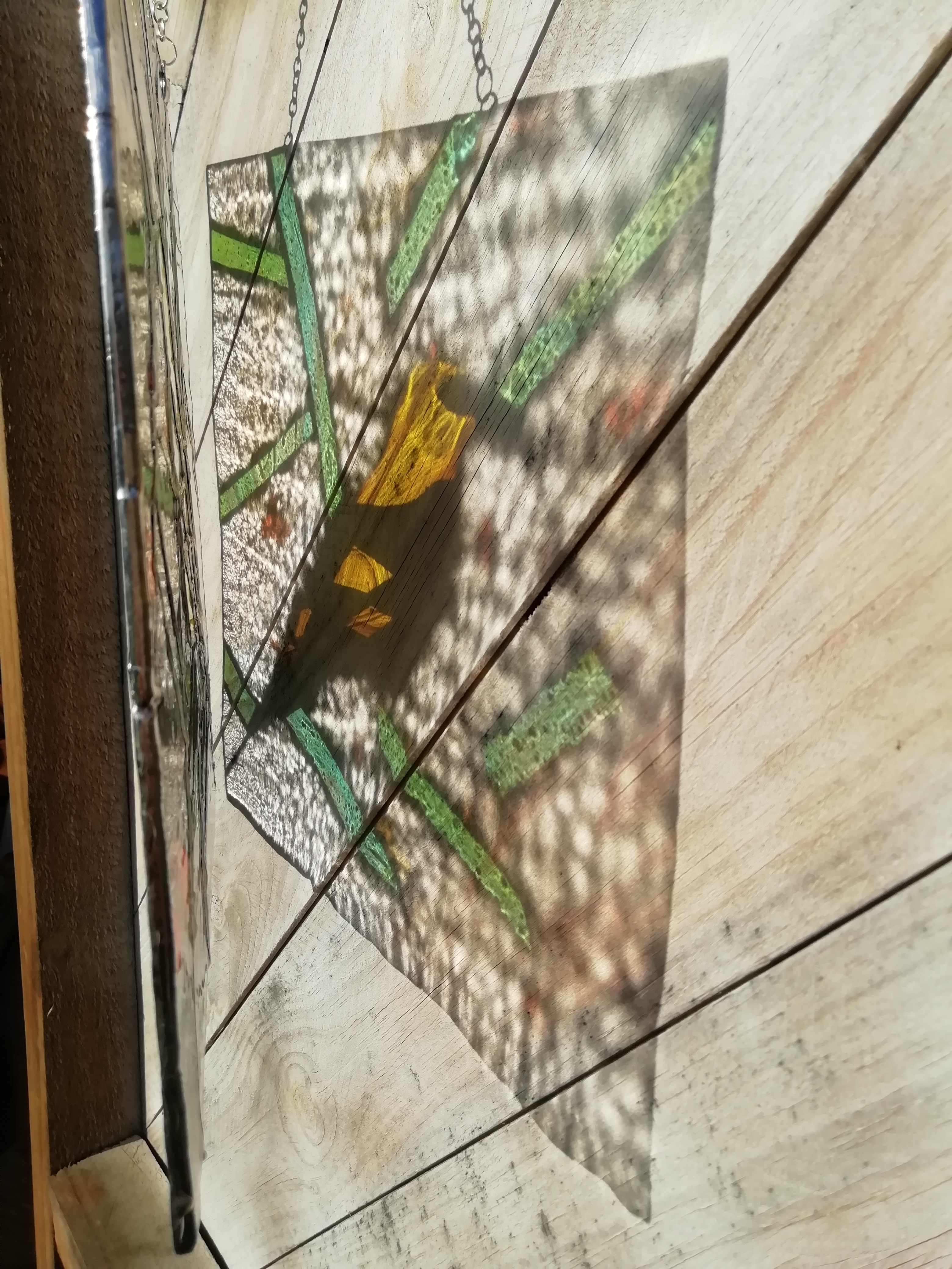 Golden Oriel reflection.