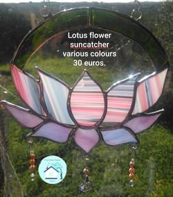 Lotus flower various colours